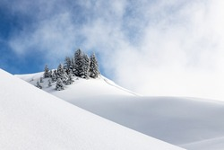 Group of firs in fresh snow with blue sky and clouds. Lines and sunlight create a graphic picture.
