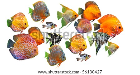 group of fishes on a white background