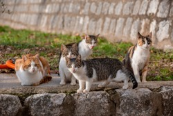 Group of five homeless cats after meal, sitting outside on the road curb, licking themselves, one ginger cat, three stripped gray, one black and ginger, blurred grass and wall on the backround