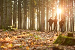 Group of foresters walk in the evening through a forest in autumn in the sunshine