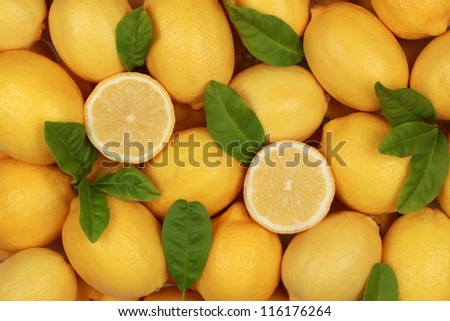 Group of fresh lemons with their leaves
