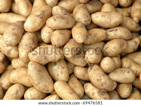 group of fresh potato