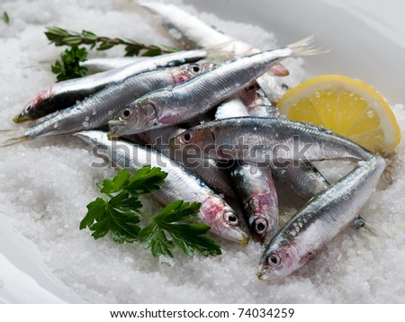 group of fresh sardines over salt - stock photo