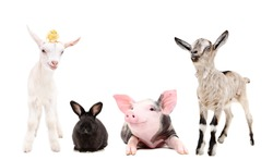 Group of funny farm animals isolated on white background
