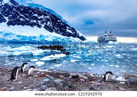 Group of Gentoo Penguins (Pygoscelis Papua), Expedition cruise ship and Antarctic landscape background, sunrise time