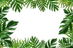 Group of green leaf frame on white