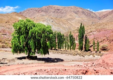 Group of green trees in desert, Bolivia