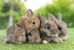 Group of healthy Lovely bunny easter fluffy brown rabbits, Adorable baby rabbit on green garden nature background. The Easter brown hares. Close - up of a rabbit.
