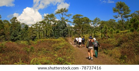Group of hikers enters forest