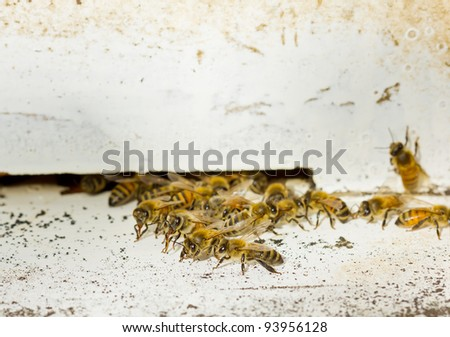 Group of honeybees on a wood beehive and making honey