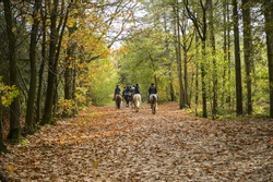 Group of horse riders in the forest in autumn