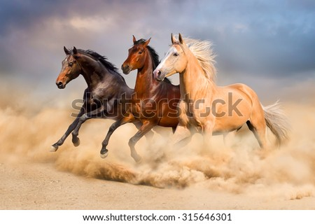 Group of horse run gallop in sand