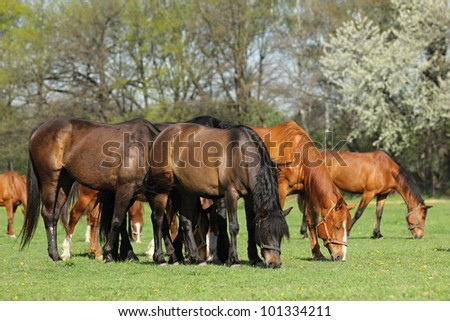 Group of horses in pasture