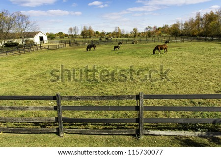 Group of horses on a farm, aerial view