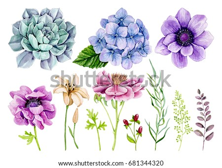 Group of individual elements, watercolor, flowers, branches, berries, anemones, hydrangea, peony, lily