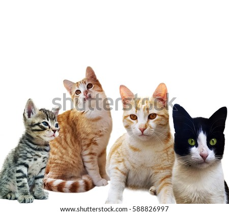 Group of kitten on white background #588826997