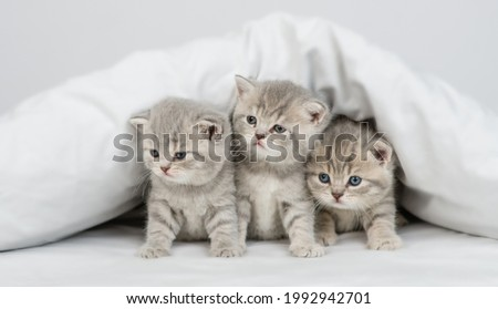 Group of kittens sit under a warm blanket on a bed at home