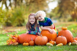 Group of little children enjoying harvest festival celebration at pumpkin patch. Kids picking and carving pumpkins at country farm on warm autumn day. Halloween and Thanksgiving time fun for family.