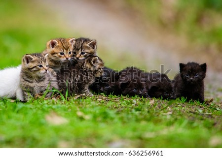 Group of little kittens in the grass #636256961