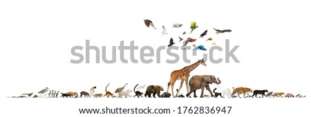 Group of many animals fleeing away, walking in a row, isolated Stockfoto ©