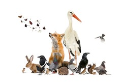 Group of many animals from european fauna park and garden, red fox, stork