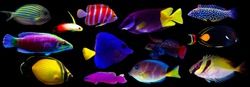 Group of marine animals isolated on black background (Fishes, Corals, Invertebrates)