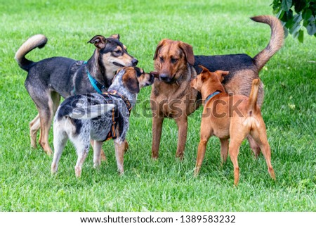 Group of Mixed Breed Dogs Meeting at Dog Park #1389583232