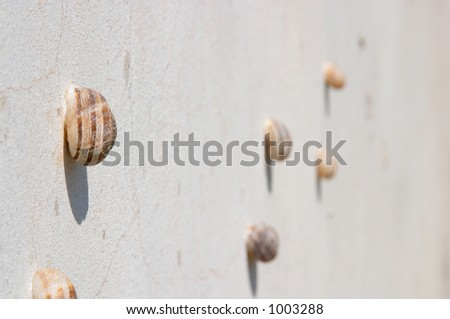 Group of molluscs on the wall