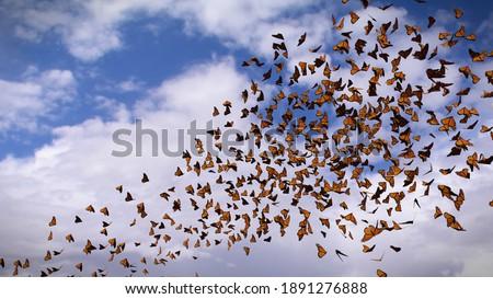 group of monarch butterflies, Danaus plexippus swarm (3d illustration) Stock photo ©