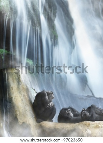 Group of 3 monkeys resting on top of rocks in front of powerful waterfall