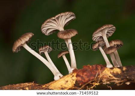 Group of mushroom