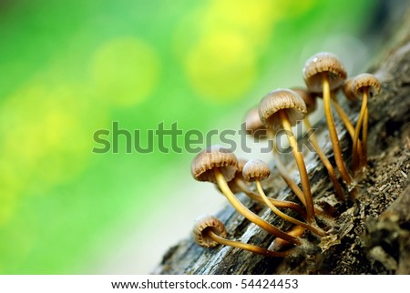 Group of mushrooms #54424453