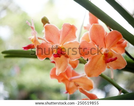 group of nice colorful orchids under natural lighting with romantic bokeh background