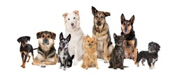 group of nine mixed breed dogs in front of a white background.only mutts