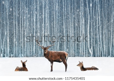 Group of noble deer in a snowy winter forest. Christmas fantasy blue image.