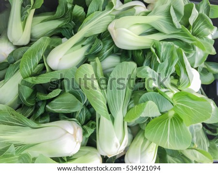 Group of organic bok choy on display at the farmer's market. ストックフォト ©