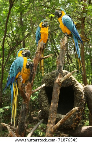 group of parrots in the forest - stock photo