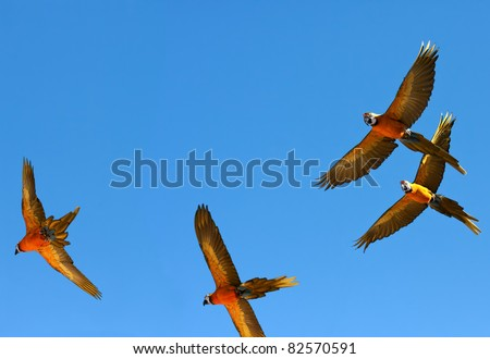 Group of parrots is flying on  backgrounds of sky.