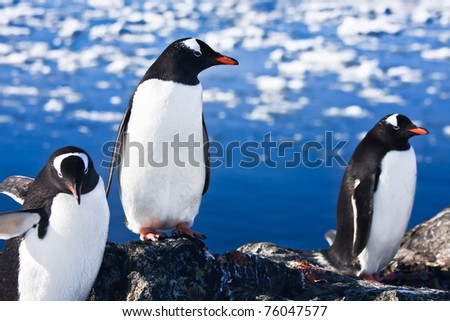group of penguins having fun in the snowy hills of the Antarctic