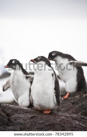 Group of penguins having fun standing on the rocks