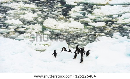 Group of penguins in Antarctica. Antarctic region of the Southern Hemisphere, almost entirely south of the Antarctic Circle, and is surrounded by the Southern Ocean.