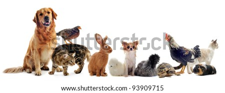 group of pet in front of a white background