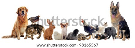 group of pet in front of a...