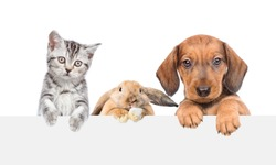 Group of pets  above empty white banner. isolated on white background. Empty space for text