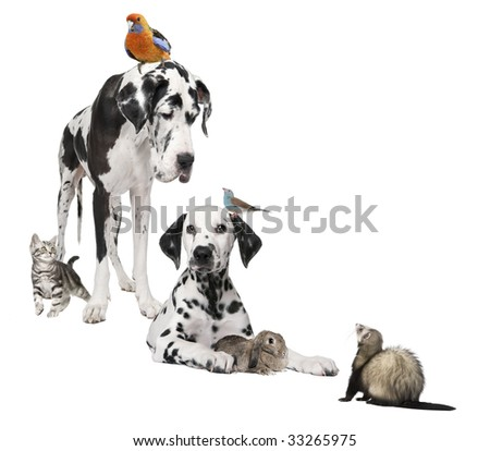 Group of pets : dog, bird, rabbit, cat, ferret in front of white background