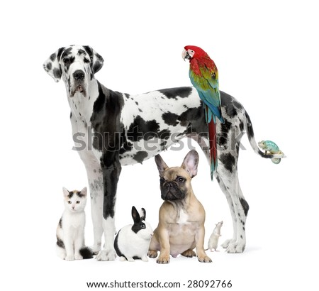 Group of pets - Dog,cat, bird, reptile, rabbit -  in front of a white background