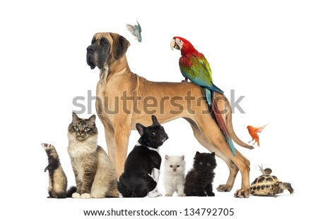 Group of pets - Dog, cat, bird, reptile, rabbit, isolated on white - Shutterstock ID 134792705