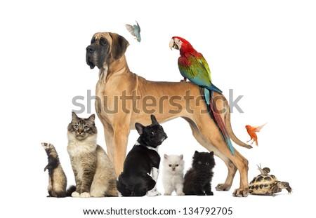 group of pets   dog  cat  bird  ...