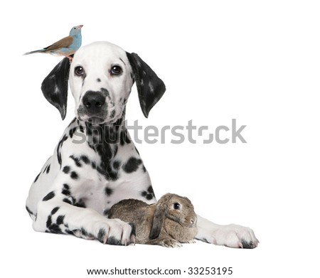 Group of pets : dog puppy, bird, rabbit in front of white background