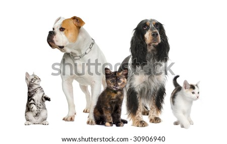 Group of pets : dogs and cats in front of a white background - stock photo
